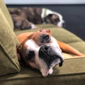 large dog boarding sofa