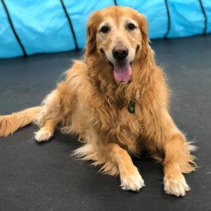 Large dog boarding room