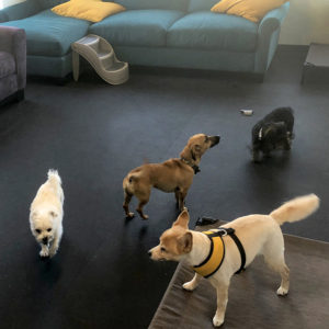 small dog boarding room