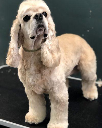 cute dog groomed
