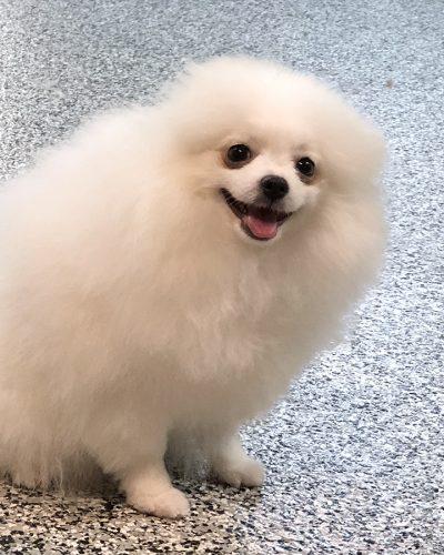 small dog grooming