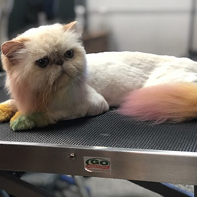 cat stylish coloring