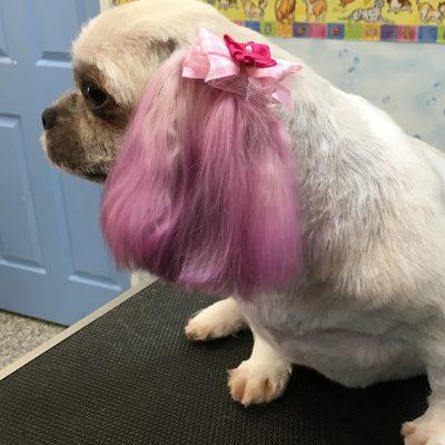 dog stylish coloring
